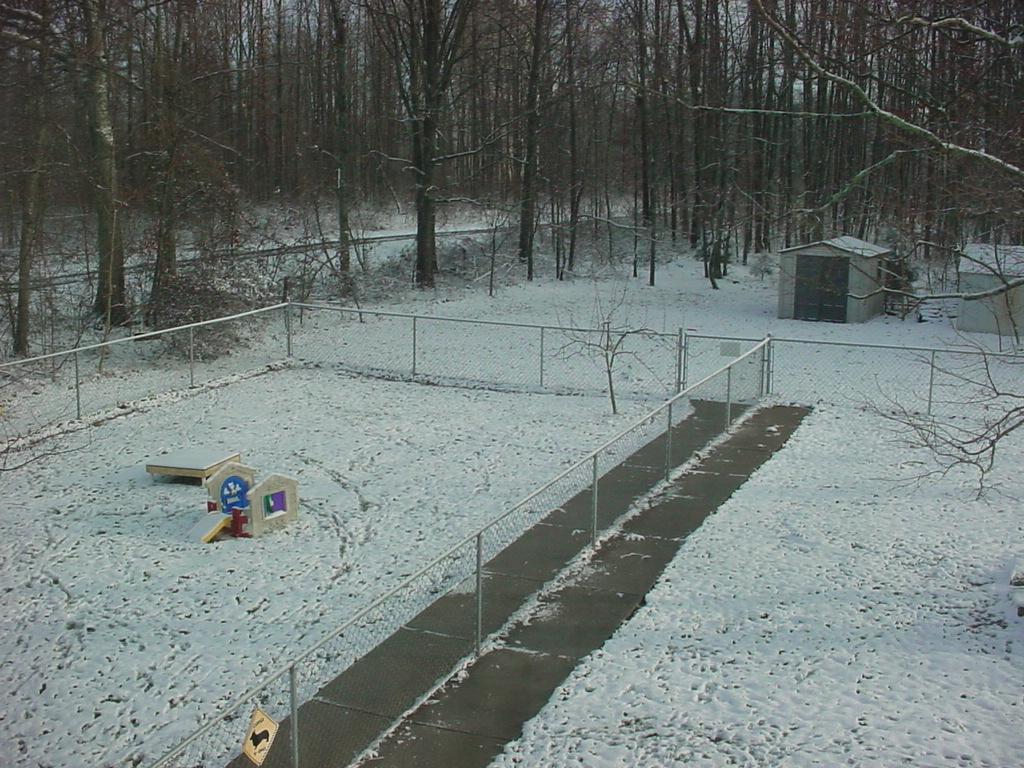 Yard Snow 12-5-09
