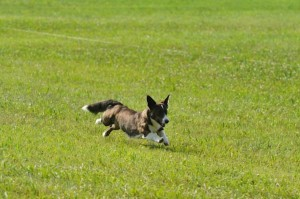 June-Coursing2-5-26-12