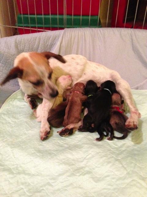 Mama and Babies 5-27-13